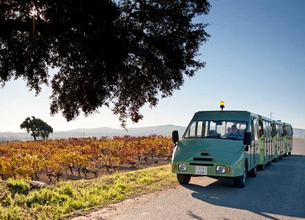 Evadium pack enol gico con maridaje de vino y tapas en - Bodegas torres vilafranca ...